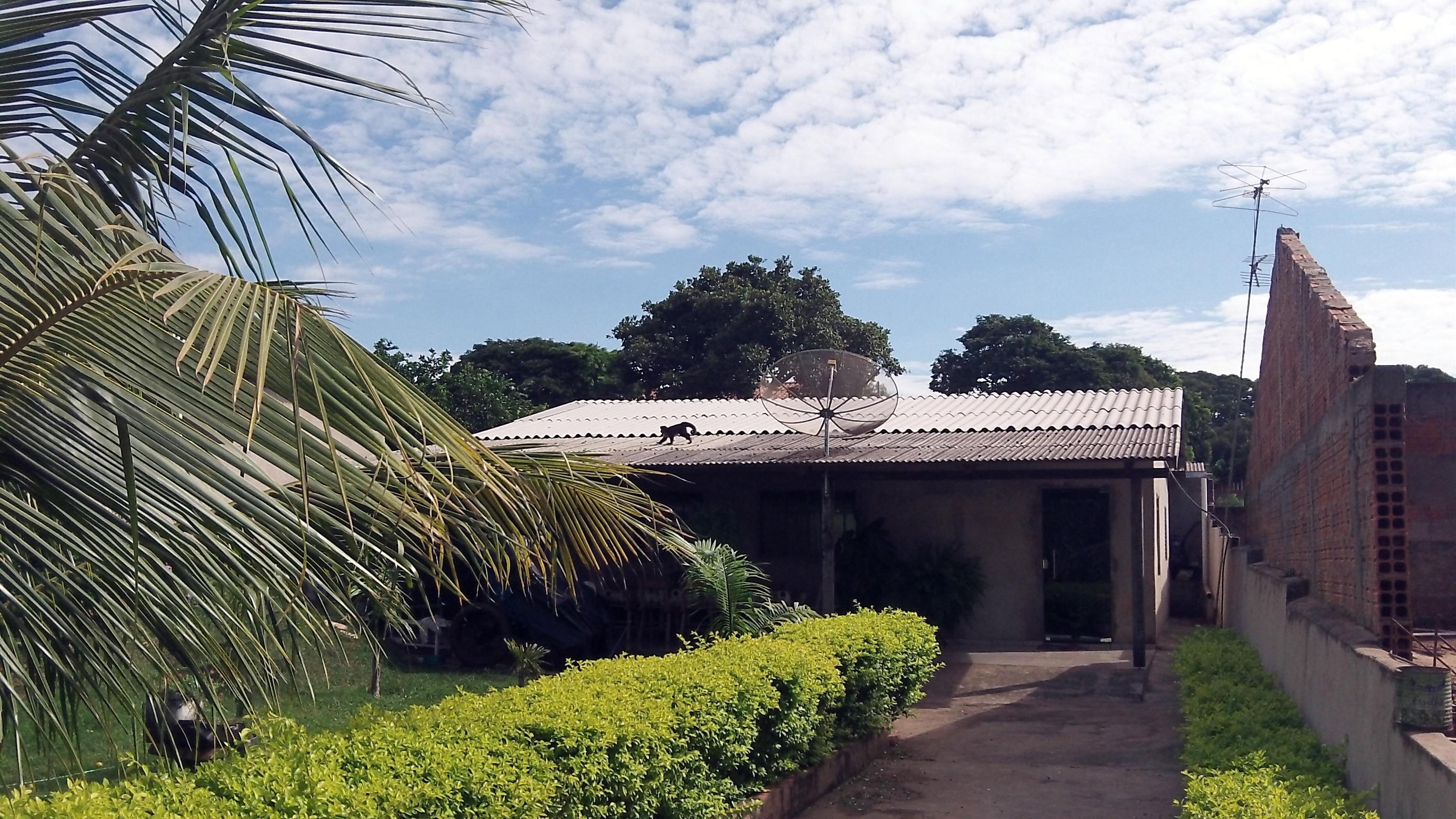 Um dos macaquinhos corre sobre o telhado da casa de dona Maria (Foto: David Arioch)